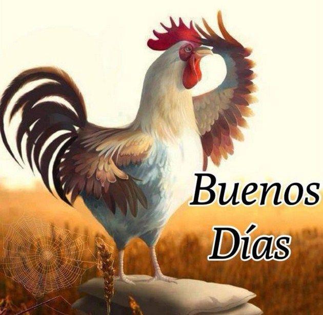 Imagenes de buenos dias con un gallo cantando | GALLS i