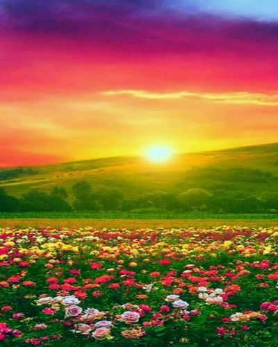 Multi Colors Flowers Beautiful Landscape Wall Art With Images Beautiful Photography Nature Beautiful Landscapes Beautiful Nature Pictures