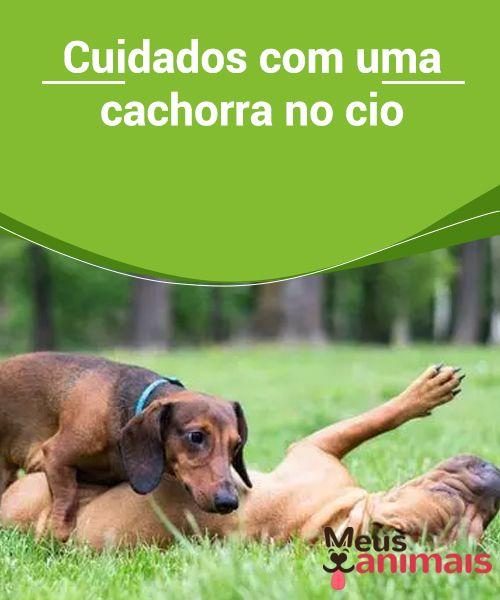 Cuidados Com Uma Cachorra No Cio Saúde Cães De Estimação