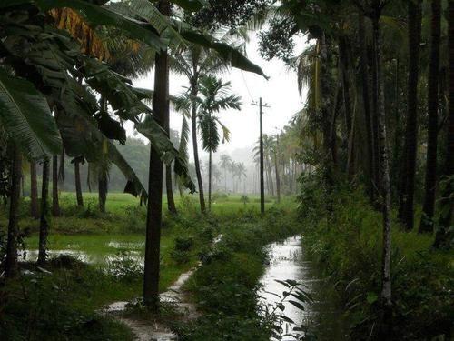 Beautiful Nature In Kerala Nature Kerala Kerala Tourism Beautiful Places To Travel Tourist Places