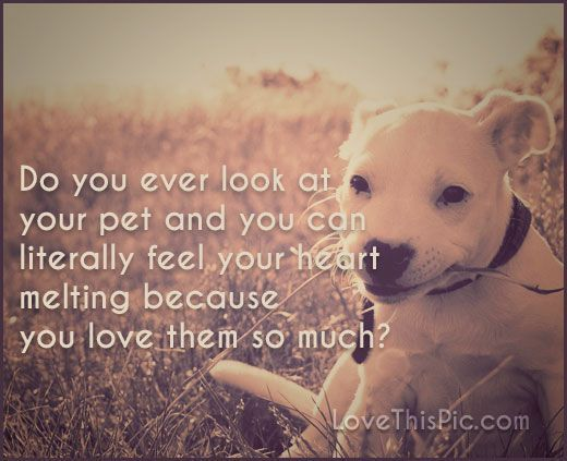 Quotes About Dogs And Friendship Pleasing Afbeeldingsresultaat Voor Dog  Quote Best Friend Fav Pinterest
