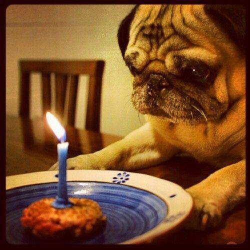 Happy Dog Birthday Happy Birthday Tumblr Dog