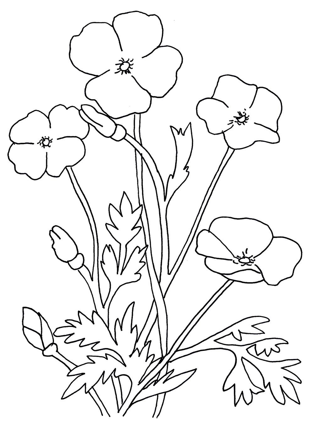 blank poppy flowers coloring sheets decoloring coloring home pages - Poppy Flower Coloring Pages