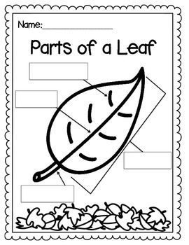 here+is+a+simple+activity+to+allow+your+students+to+label+the+parts+of+a+ leaf +enjoy!