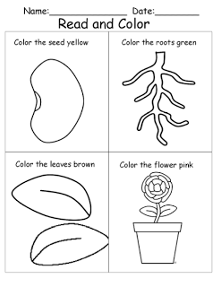 following directions and coloring plants worksheet. | Science/Social ...