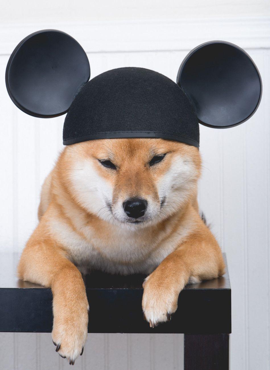 Pin By Linda Lo On Shiba Love Shiba Inu Cute Animal Photos Japanese Dogs