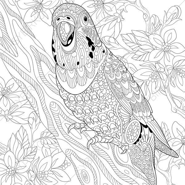 Coloring Pages For Adults Budgie Parrot Adult Coloring Pages