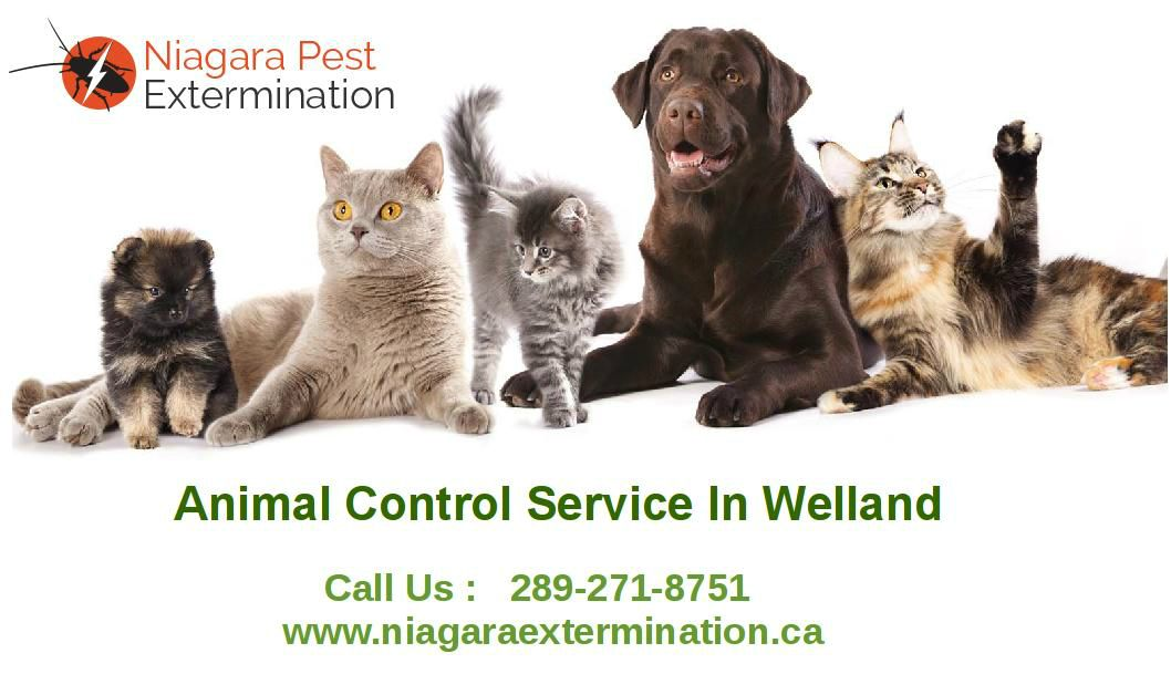 Animal Control Welland It is a leading wildlife removal