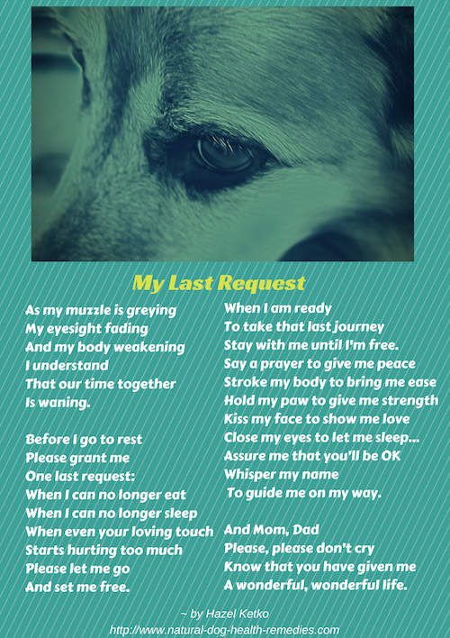 Canine euthanasia poem dog and rainbow bridge a poem more solutioingenieria Images