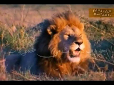 Youtube Animals Radio