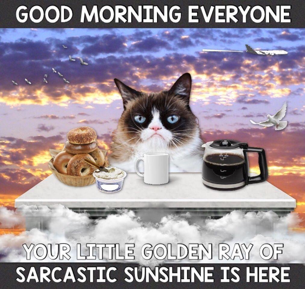 Grumpy Cat Morning Funny Grumpy Cat Memes Grumpy Cat Grumpy Cat Quotes