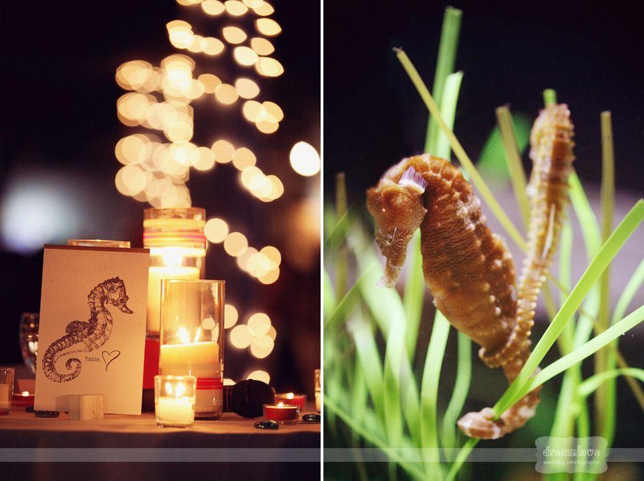 Mystic, CT – Aquarium Wedding Photography – Lara & Steve » Dreamlove Wedding Photography | Anthropologie Inspired | NH – MA – VT