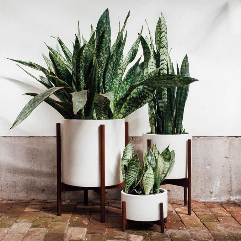 good indoor plants decor ideas for apartment and home air purifiying indoorplants decorideas apartments also rh pinterest