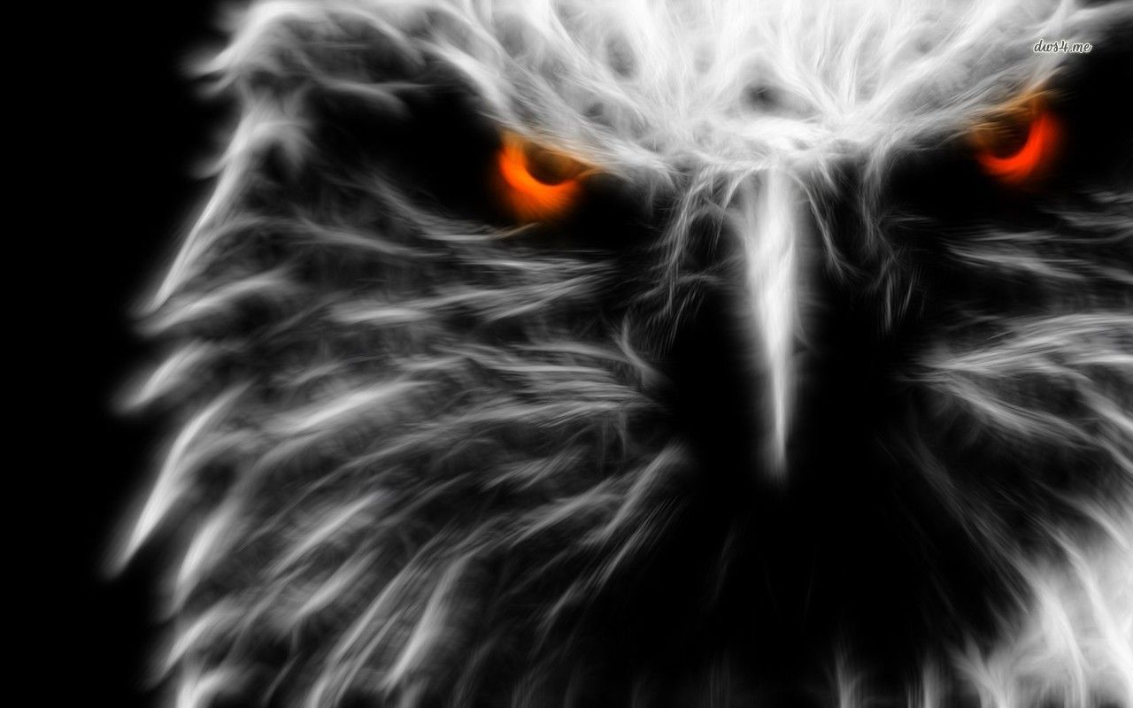 Golden Eagle Portrait Null Eagle Pictures Animals Black And White Eagle Wallpaper