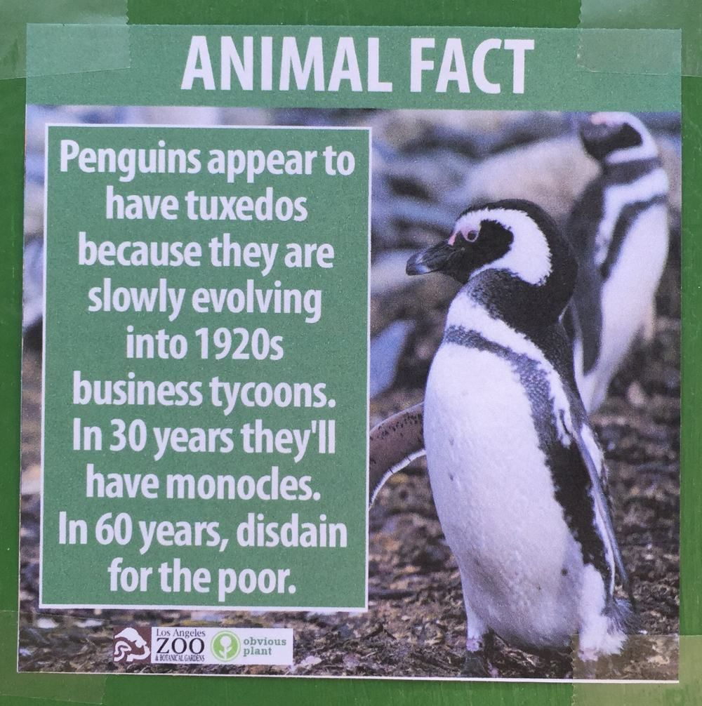These Fake Animal Facts Were Posted At The Los Angeles Zoo Pleated Jeans Com Animal Facts Fake Animals Funny Animal Facts