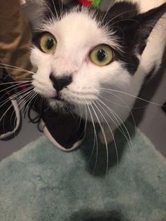 Adopt Leala On Petfinder Cat Adoption Humane Society Adoption