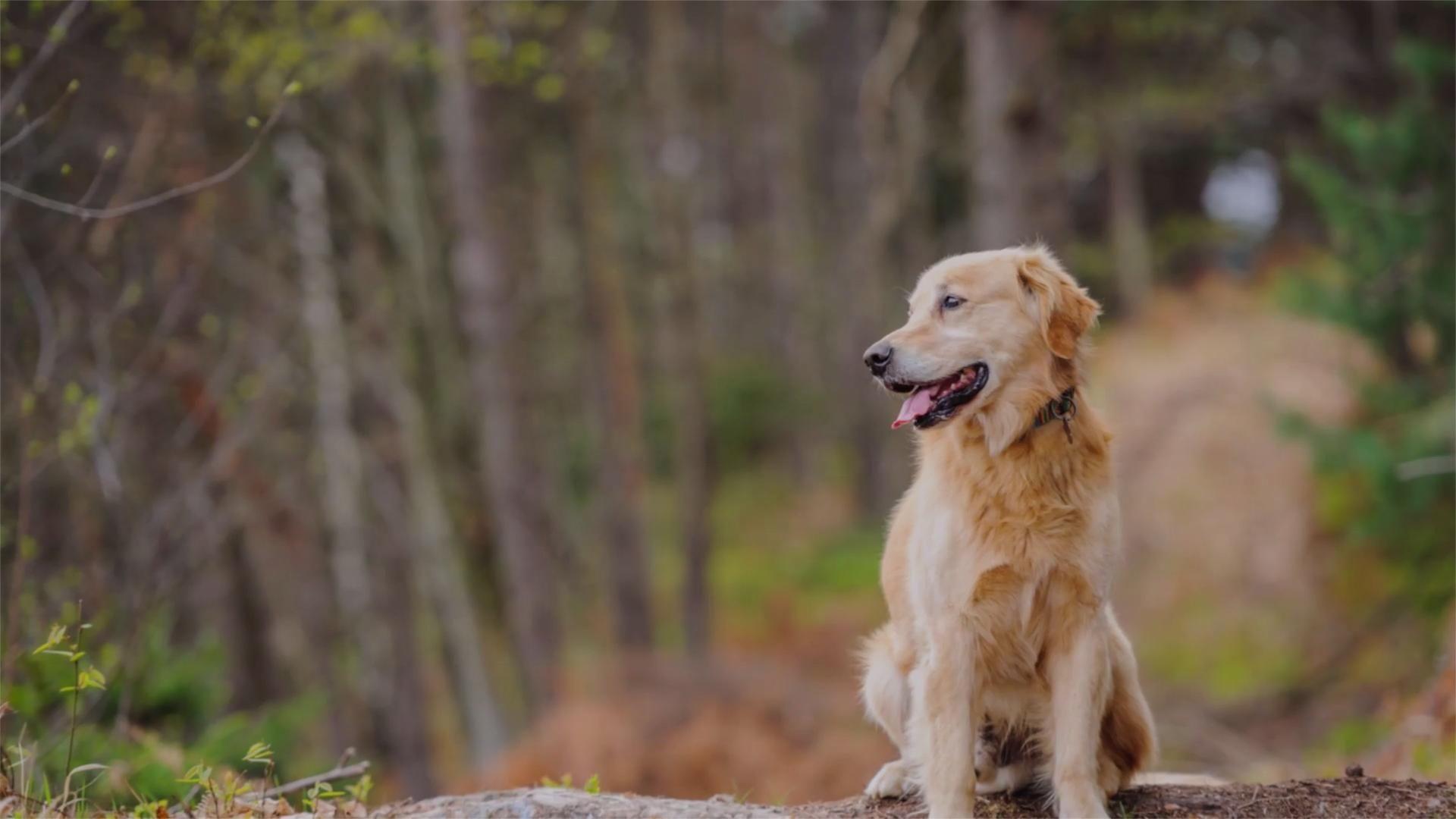 Hikers find dog after he spent 11 days lost in shenandoah