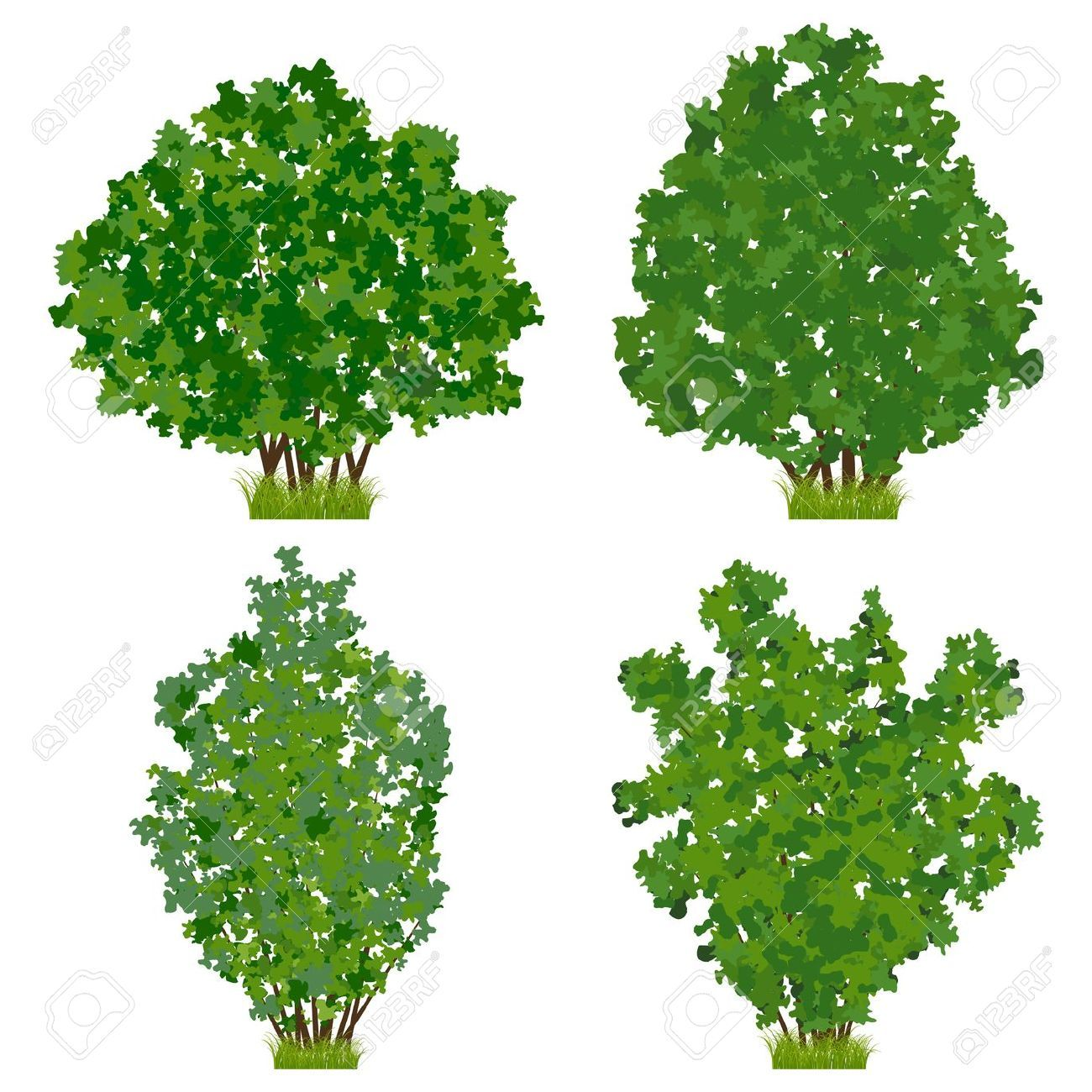 Shrub google search food forests pinterest shrub for Arbustos de jardin