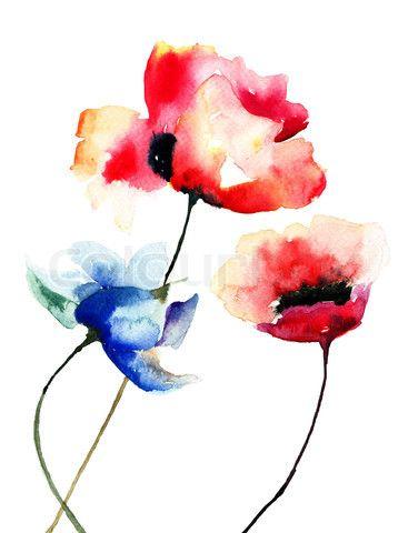 7095749 156329 valmue blomster akvarel illustrationg 376480 7095749 156329 valmue blomster akvarel illustrationg 376480 pixel mightylinksfo