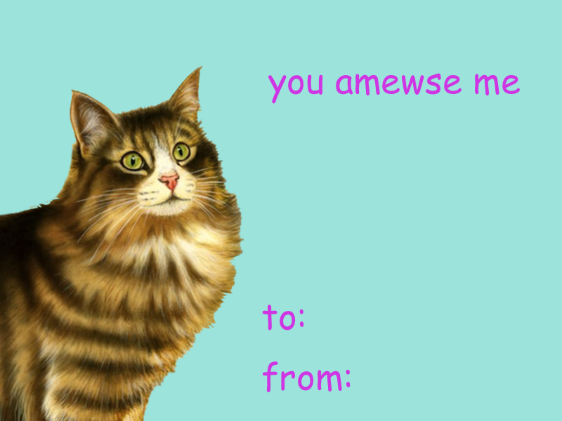 Cat Valentines Day Cards On Tumblr Comic Sans Valentines