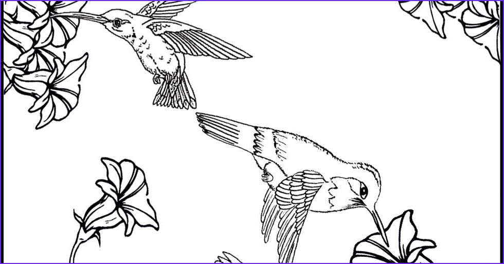 Hummingbird Coloring Pages Hummingbird Coloring Pages Free