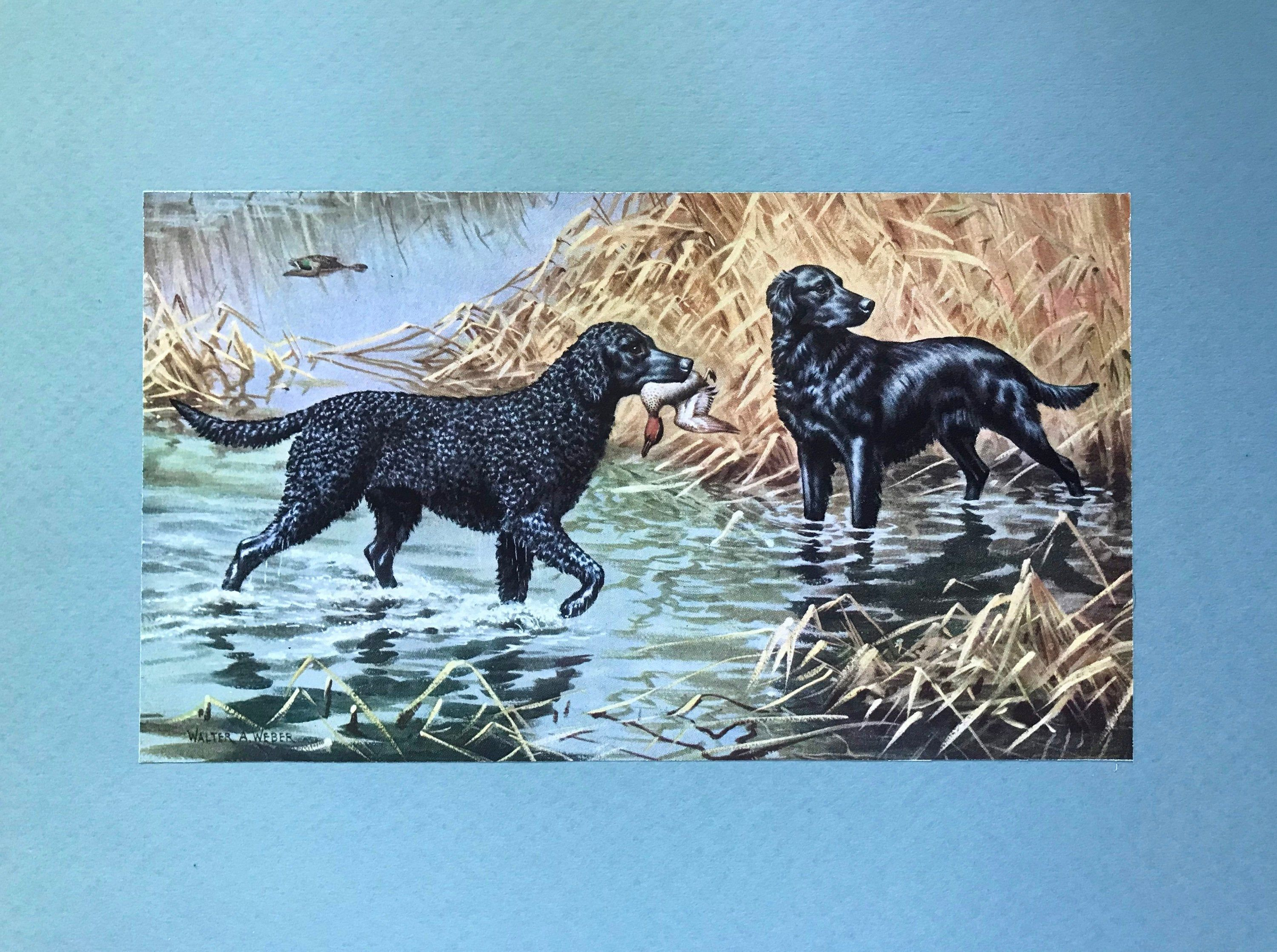 Pin On Dog Collectibles