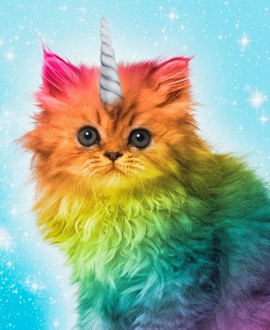Rainbow Colored Kittens With Images Rainbow Kittens Rainbow