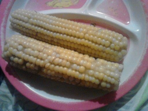 Mmmm boiled corn just yummy