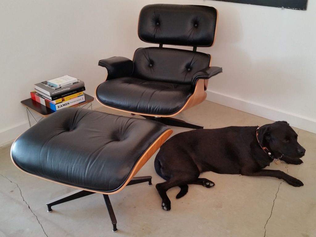Eames Lounge Chair Herman Miller - Raleigh the eames dog with his new and authentic eames lounge chair and ottoman by