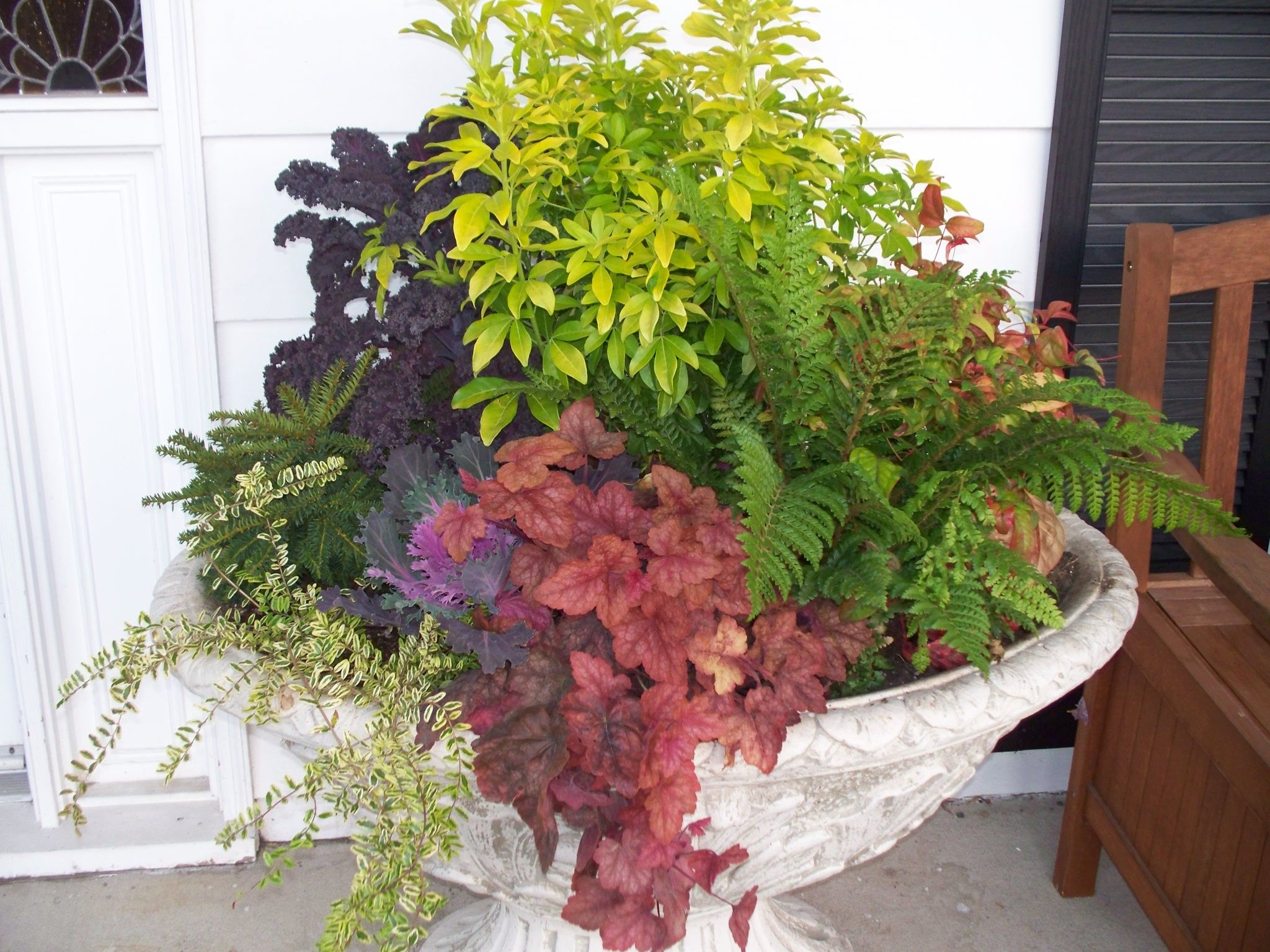 fall color plants for container gardens sword fern heucheras