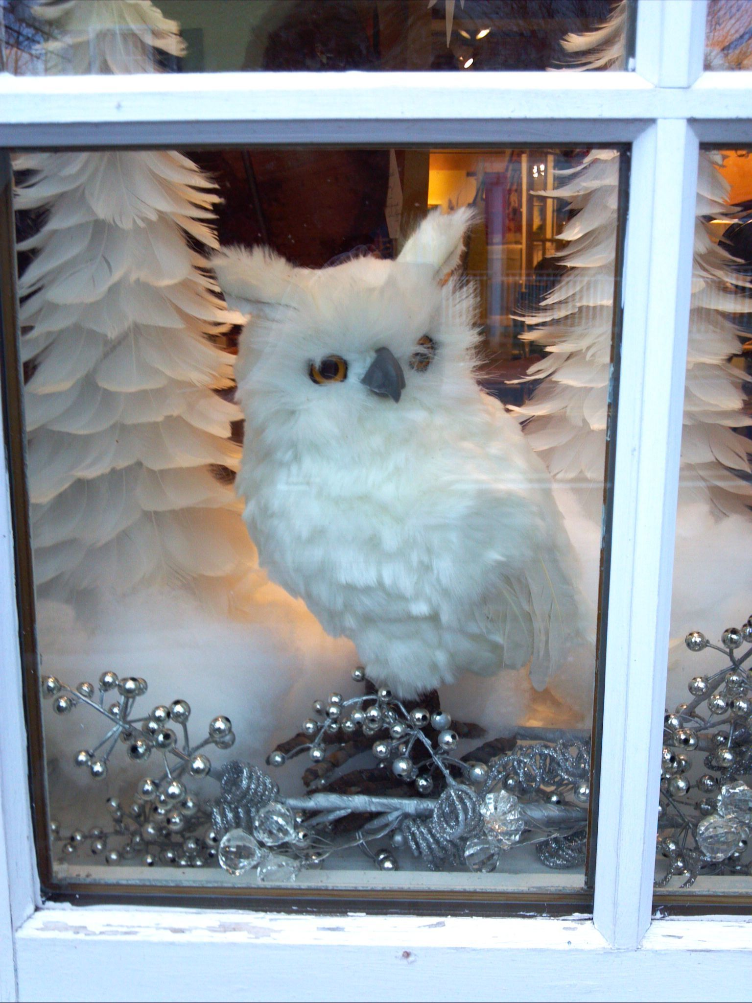 Cute white owl & feather trees in Christmas display window