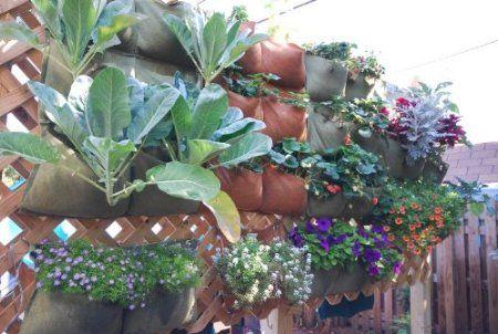 Amazon.com: The Urban Garden-vertical planter, hanging garden: Patio, Lawn & Garden