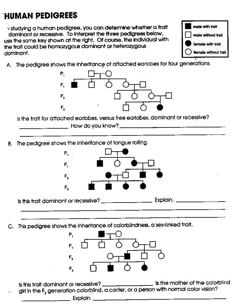 Genetics Pedigree Worksheet Answer Worksheets Are An Important Part Of Gaining Knowledge In 2021 Genetics Practice Problems Word Problem Worksheets Biology Worksheet Answer key for biology worksheets