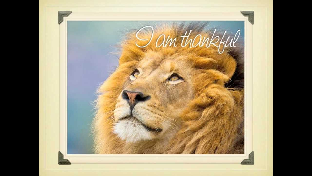 THE BEST THANKSGIVING SONG EVER - THE POWER OF GRATITUDE, PRAISE, WORSHIP, ADORATION, APPRECIATION