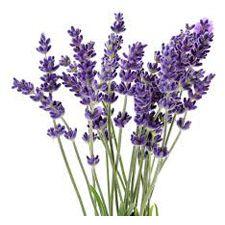 lavendersprigs