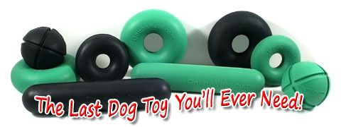 Dogs Go Nuts For Goughtnuts Safe Durable And Fun Lifetime
