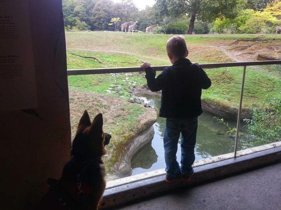 Karma At Woodland Park Zoo With Ace 5 Woodland Park Zoo Woodland Park Service Dogs