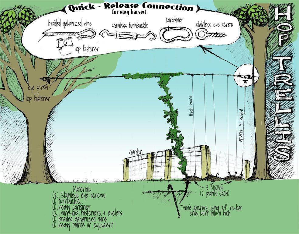 Create a hops trellis between two trees garden for Hops garden designs