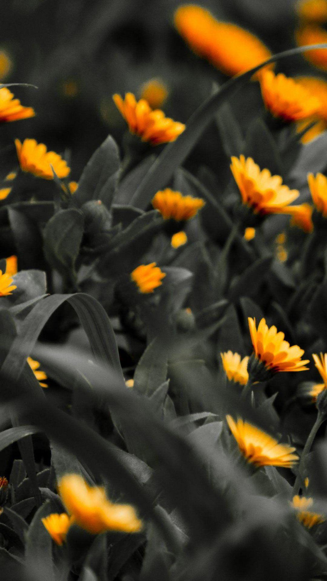 The Orange To Black Fade Black Wallpaper Iphone Black Wallpaper Iphone Wallpaper
