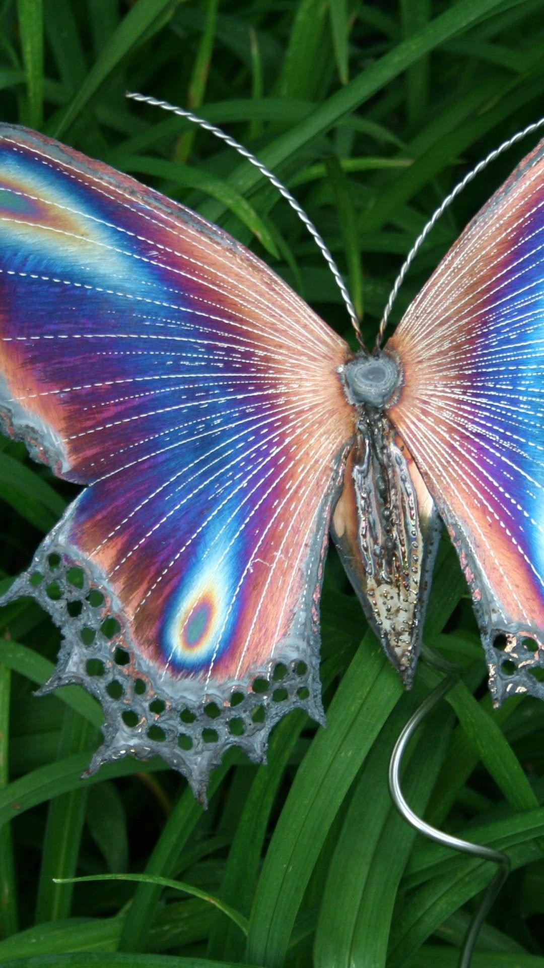 Butterfly iPhone 6 Plus Wallpaper 13382 Animals iPhone 6