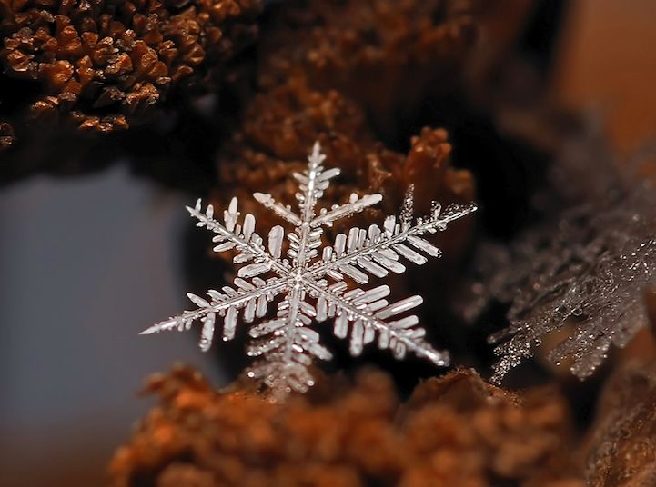Beautiful Macro Photos of Tiny Snowflakes