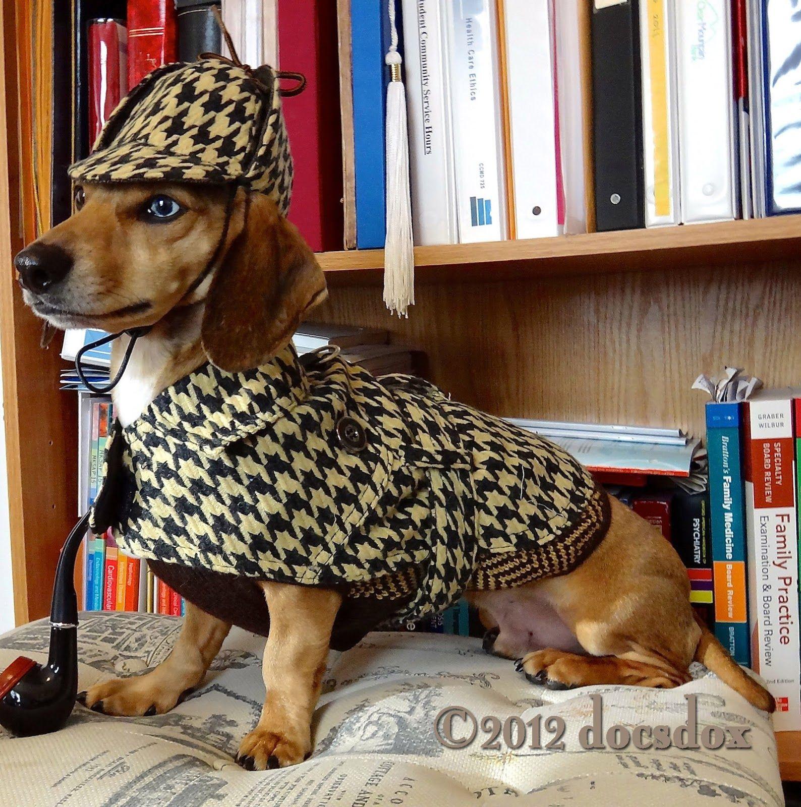 Hallo Wien 2012 The Littlest Detective Detective Dachshund