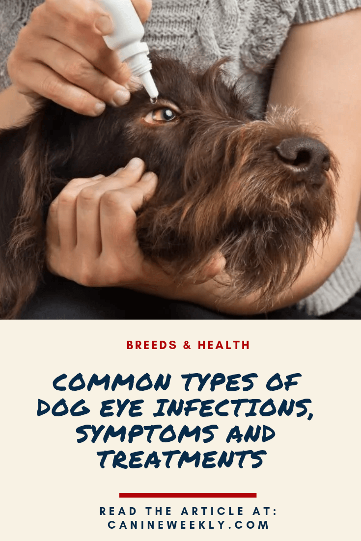 Lanosterol Treatment For Dogs Pictures