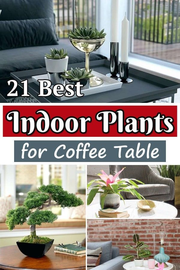 21 Best Coffee Table Plants To Grow Indoors | Coffee table ...