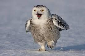 Man and owl - Google 検索