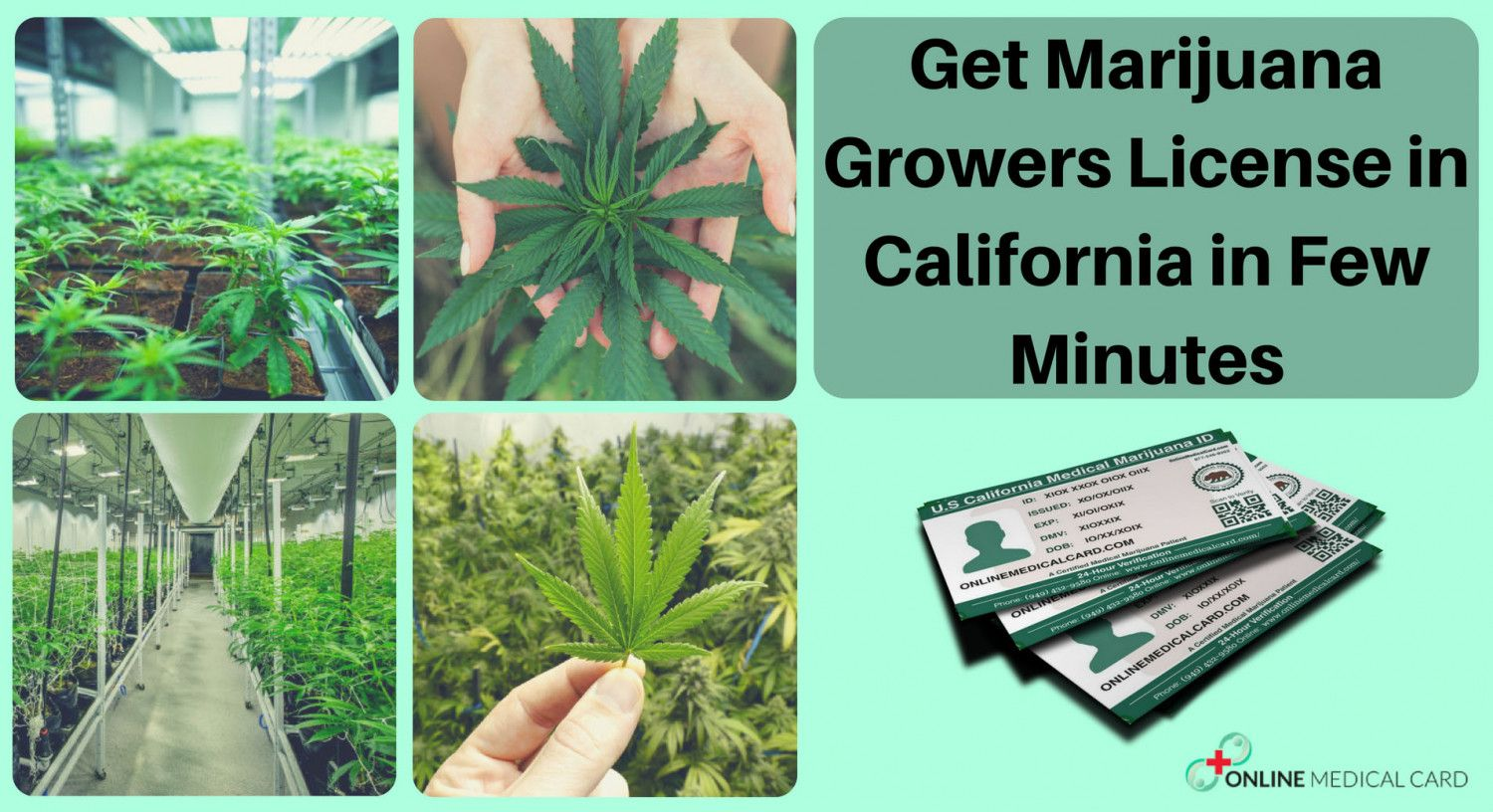 Need to increase your #grow limit? Get a #growers