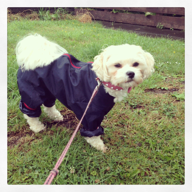 Rainy Day Jacket Puppy Zuchon Schichon My Gorgeous Girl