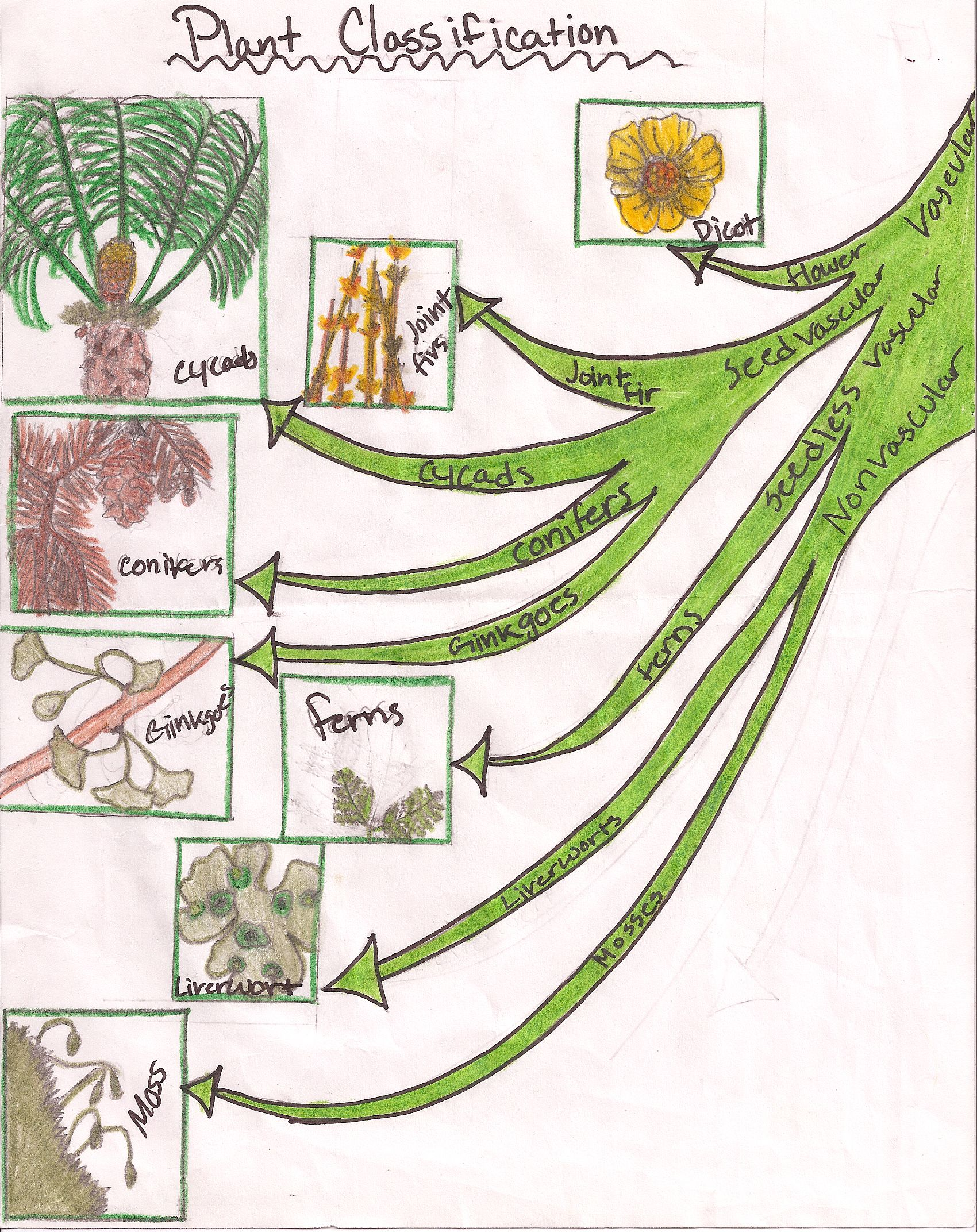Plant Classification To Understand The Different Levels Of A Plant