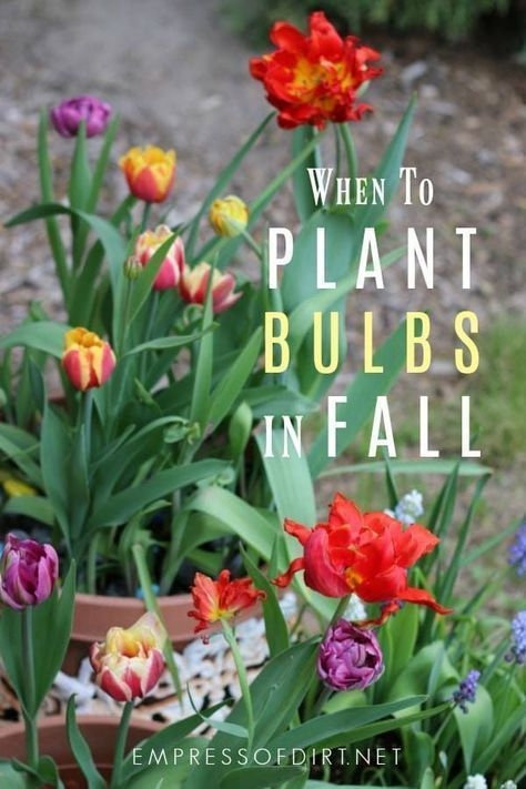 to know the right time to plant bulbs in fall There are plenty of signs and signals that nature provides to guide us See howNeed to know the right time to plant bulbs in...