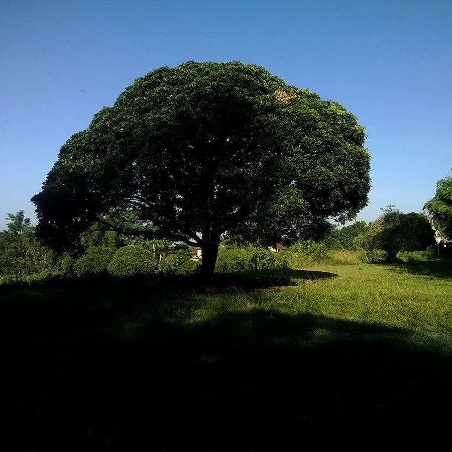 a tree around my home, taken with Lumia. [rovitavare/Kompemopahe]